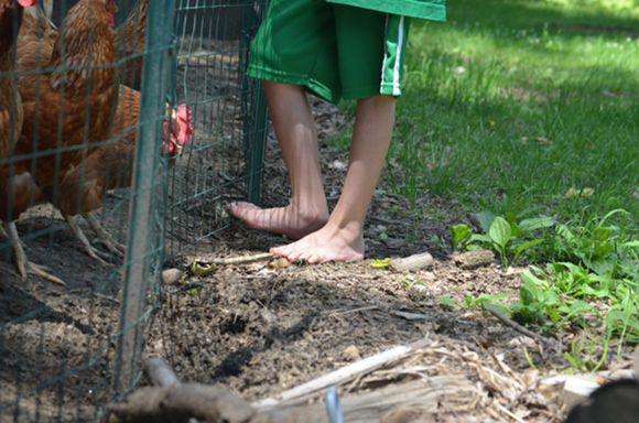 Child Barefoot With Chickens